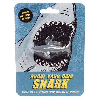 Rex London wachsender Haifisch